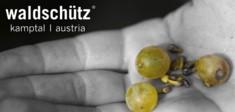Die Trauben aus dem Kamptal für das Weingut Waldschütz.