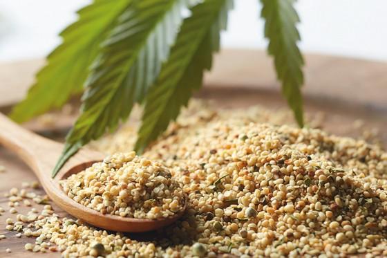 Gesunde Samen für die Nougatcremes vom Biohof Schickmaier.