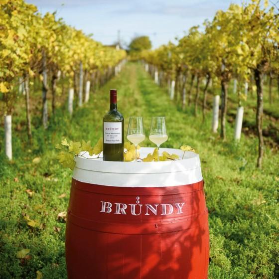 Bründy Wein mit Gläsern inmitten von Weinstauden.